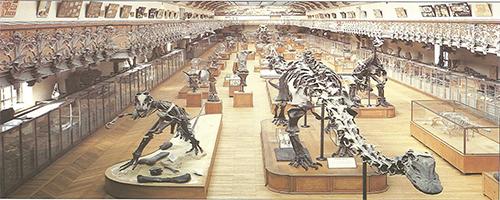 Les dinosaures mus um national d 39 histoire naturel - Jardin des plantes paris dinosaures ...